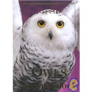 Owls An Artist's Guide to Understanding Owls by Scholz, Floyd, 9780811710213